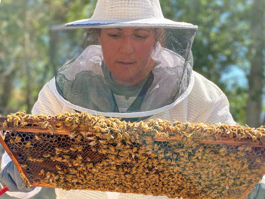 a person wearing a beekeeping suit and handling a beehive frame covered with honeybees