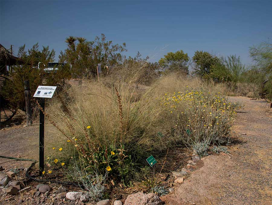 A pollinator garden bordered by rocks and surrounded by a naturally landscaped park grows wild, sending up a variety of flowers.