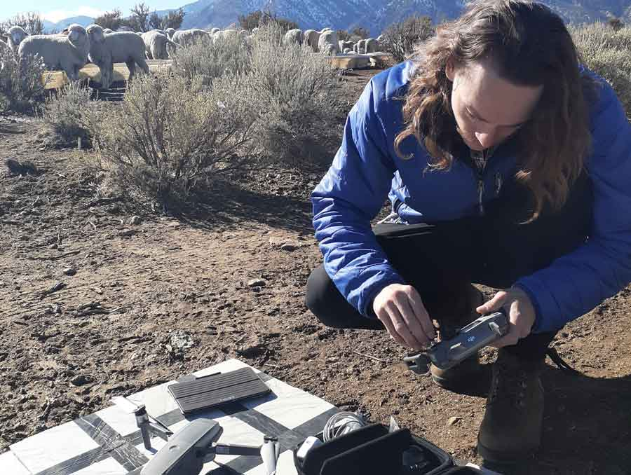 Rangeland Ecologist Joseph Domer prepares a drone from a pasture where sheep are grazing.