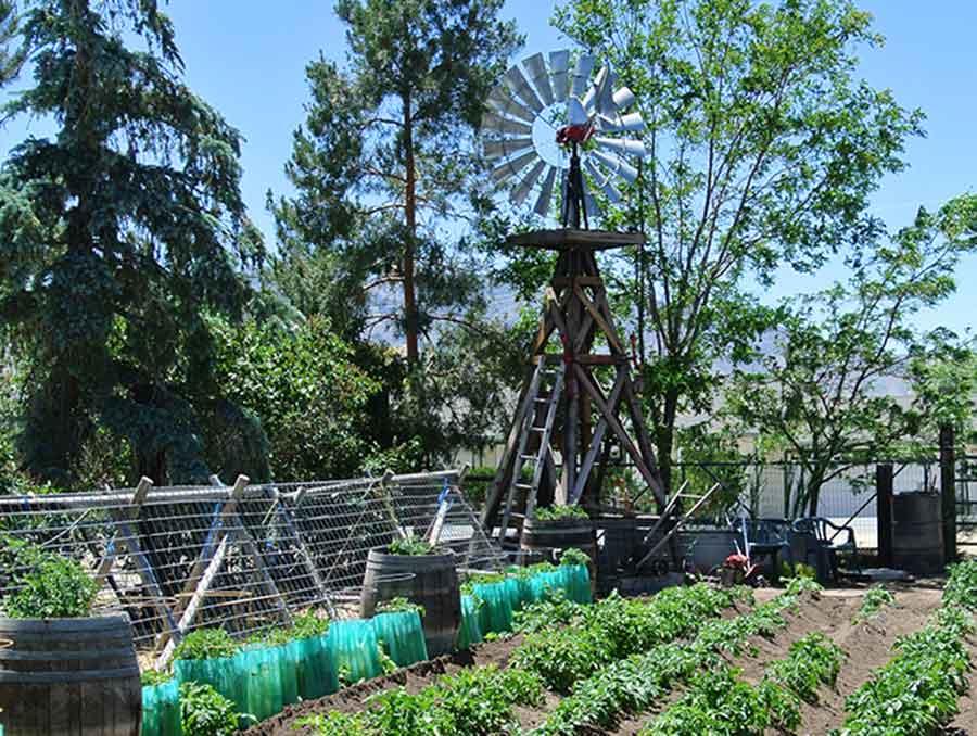 Windmill overlooking rows of garden beds.