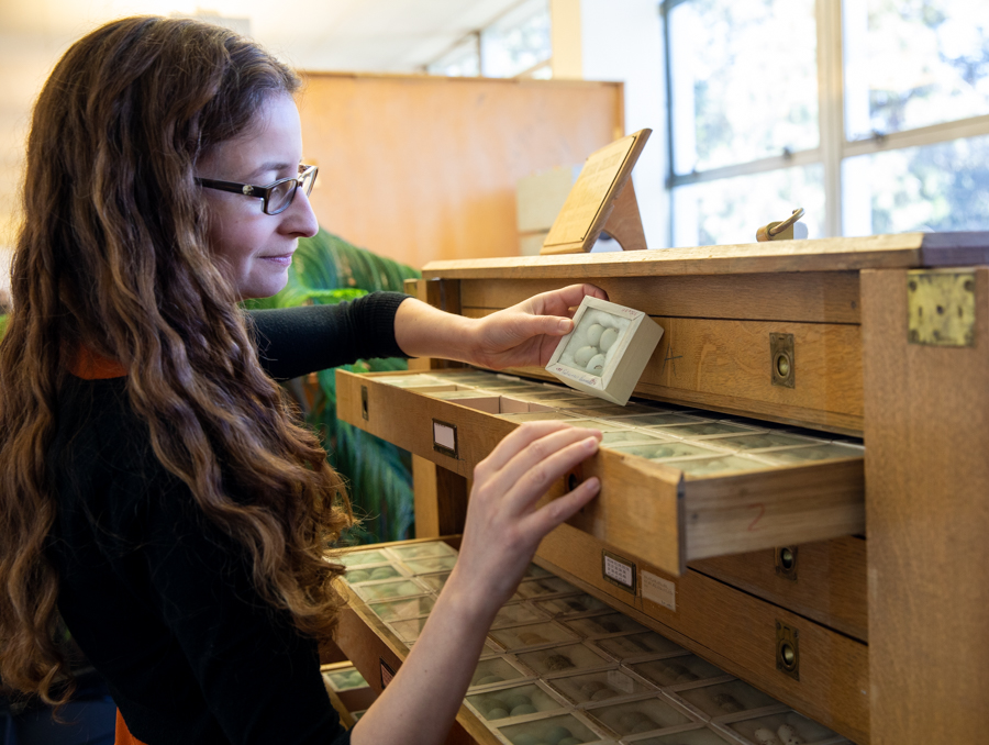 Elizabeth Leger opens a drawer containing boxed bird eggs