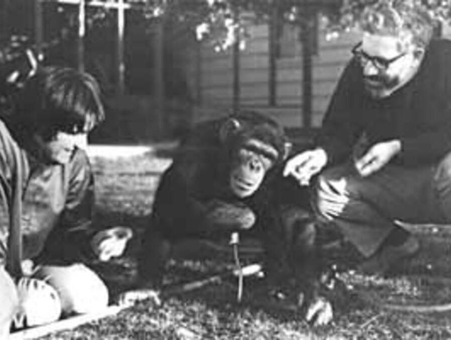 Psychology professors Trixie and Allen Gardner with Washoe the chimp