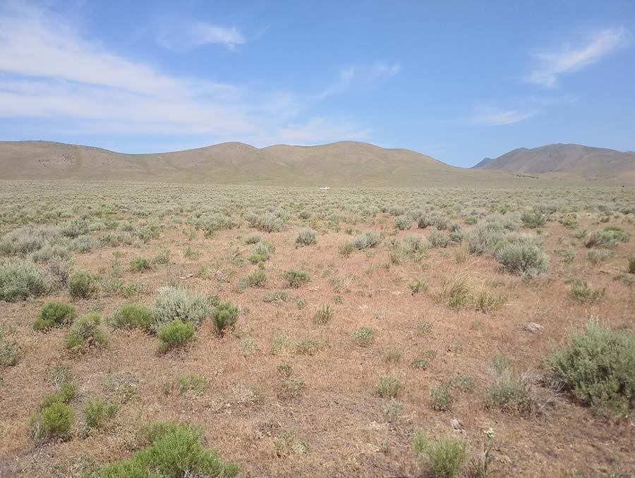 Desert rangeland with scattered cheatgrass plants.